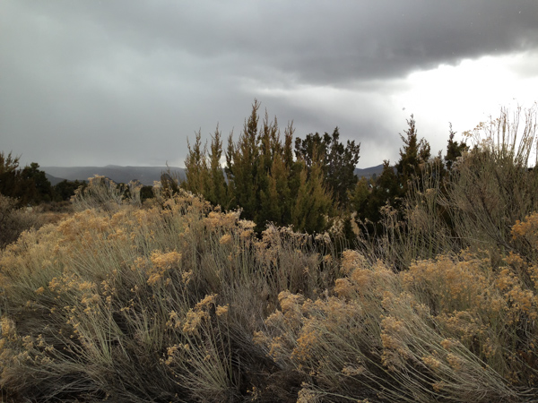 Wind swept in White Rock