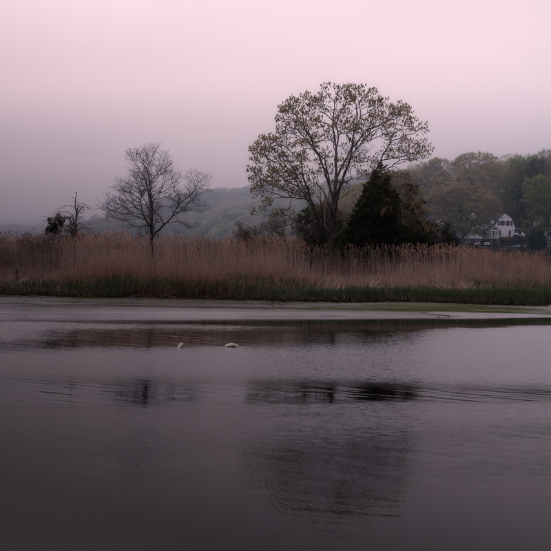 CT River Tree Mist_Chester-_DSC2296-SQREcopy 3.jpg