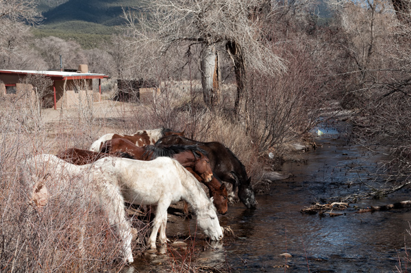 As if sent by Central Casting, these free roaming ponies came galloping by for a drink just as we crossed the bridge over the river.