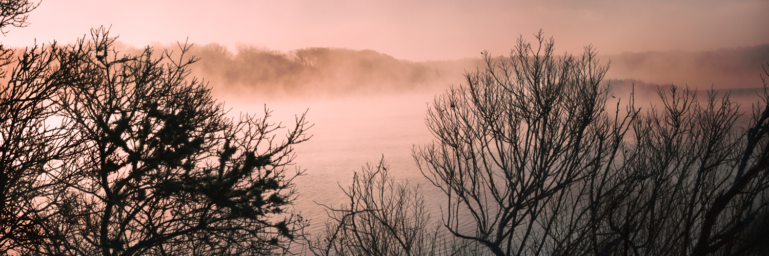 Trees and River Mist