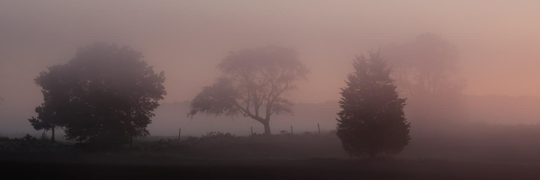 Trees in Purple Mist