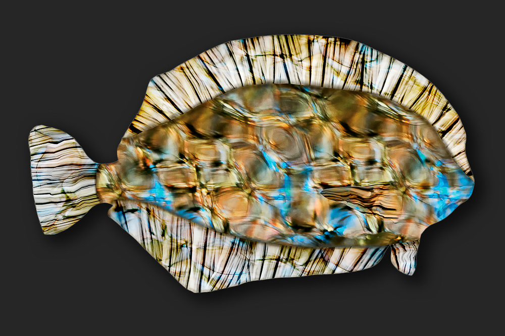 Lost in Reflection: Flounder 2014