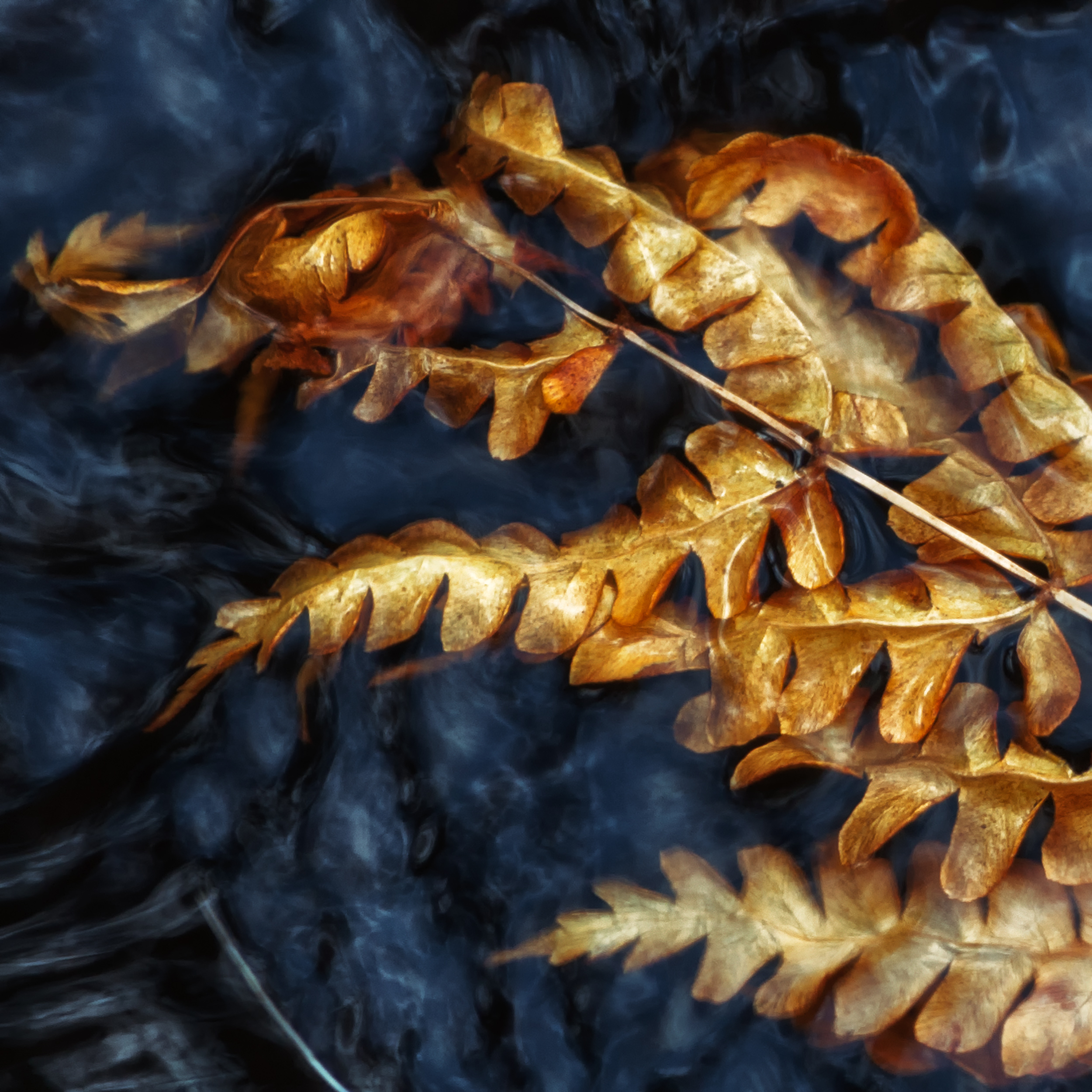 Copper Pinnate