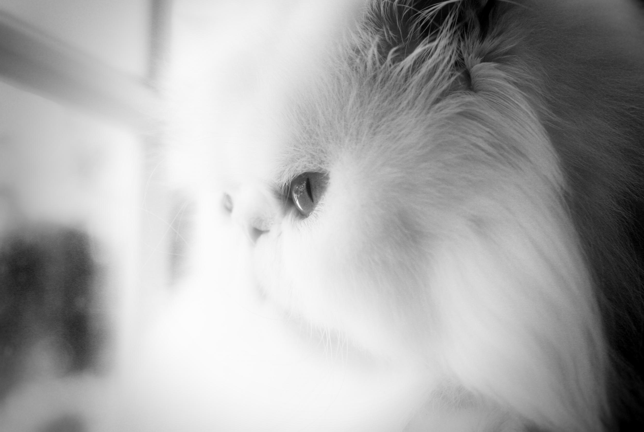 Leo window.jpg