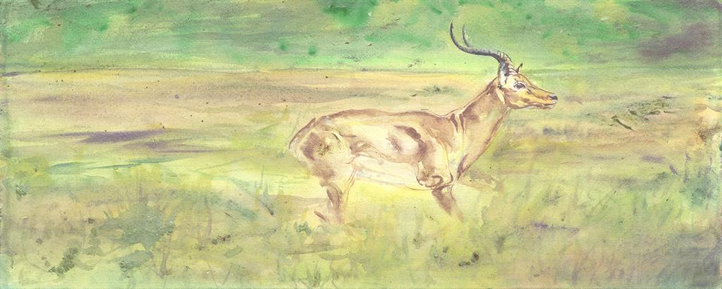 Flight of the Gazelle