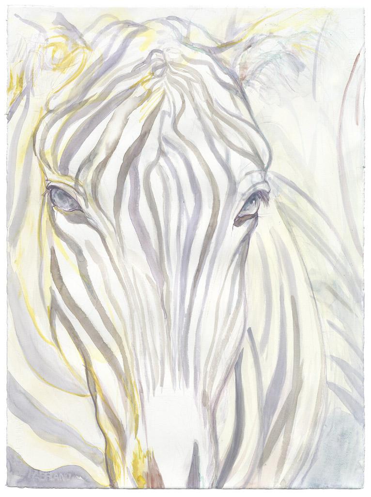 Eyes of the Zebra