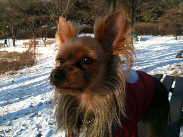 Barney's afternoon walk :-)