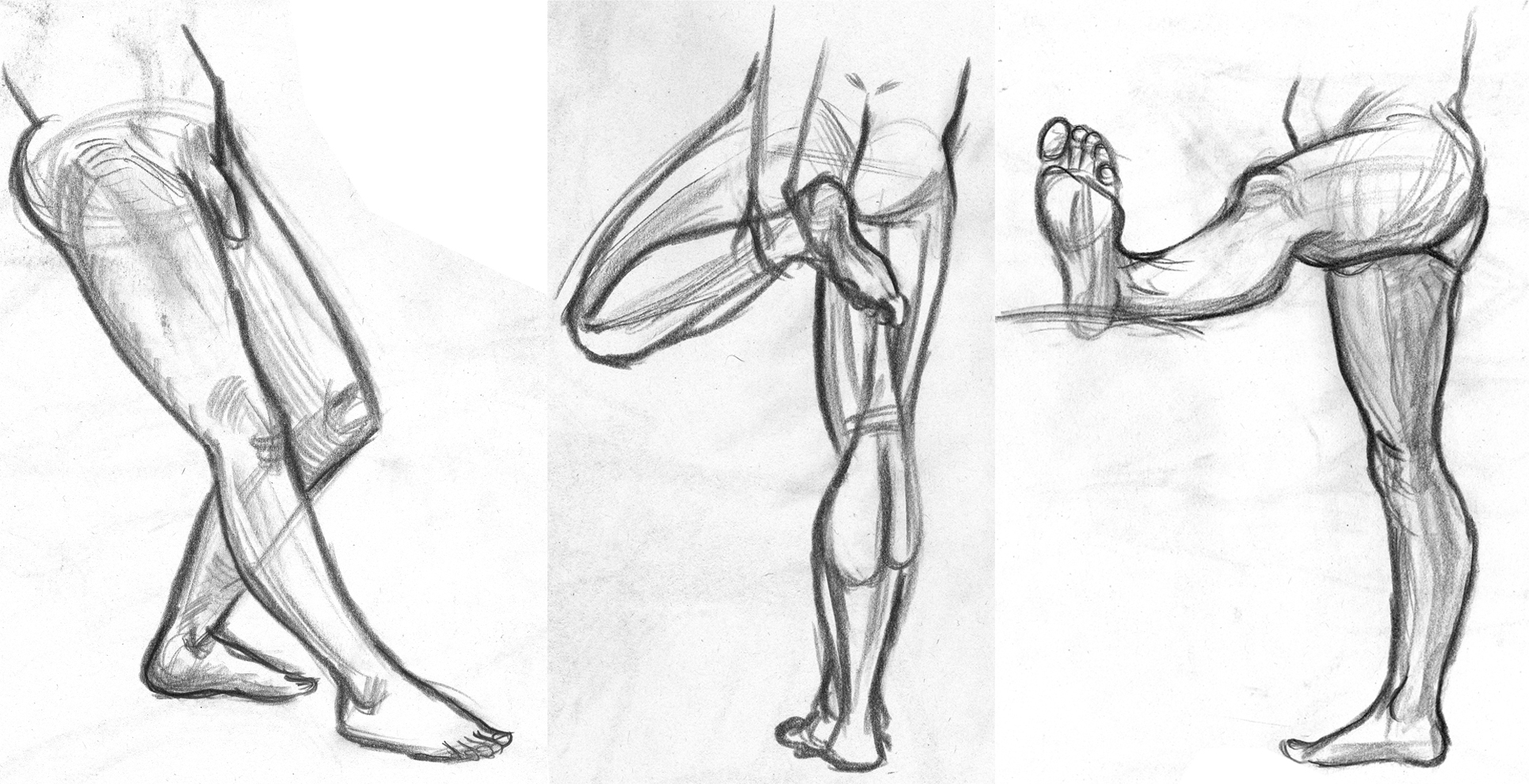 LD__Leg_Anatomy_by_pyuan.jpg
