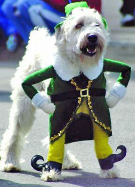 22 Dogs Having The Craic on St. Patrick's Day