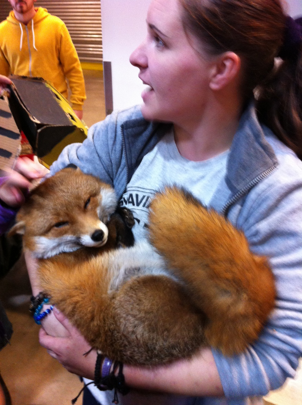 VERY IMPORTANT ANNOUNCEMENT: Ikea Belfast have a Real Live Fox Visiting Until This Sunday