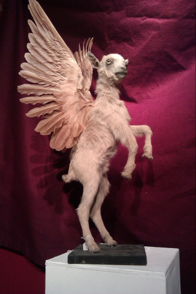 I Love You, Last Tuesday Society. Winged Puppies.