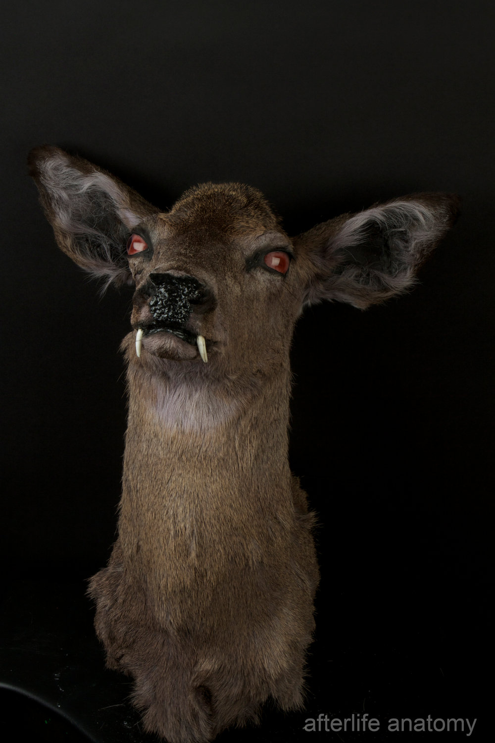 Antlered Taxidermied Fox. Excellent Combination.