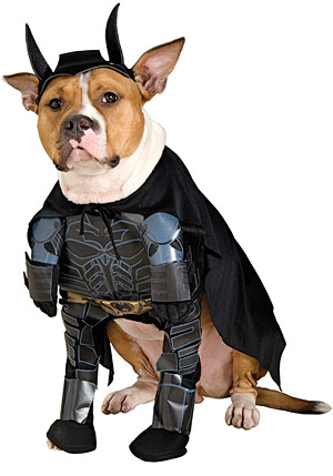 On a Rainy June Day, The Only Thing to Cheer Us Up- Dogs Dressed as Superheroes