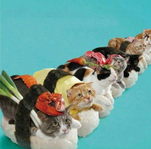 Cats Dressed Up As Sushi