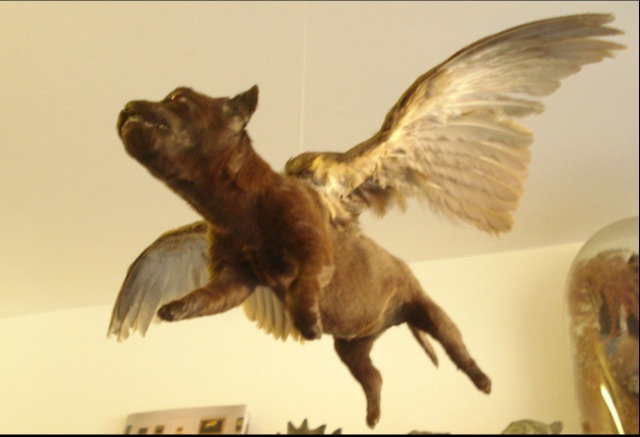 Taxidermy Flying Puppy & Winged Bunny