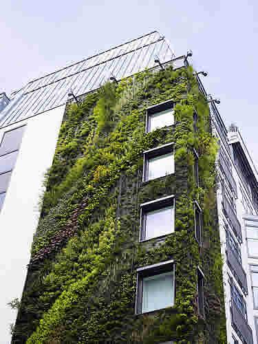 Living Walls - Bringing Greenery to The City