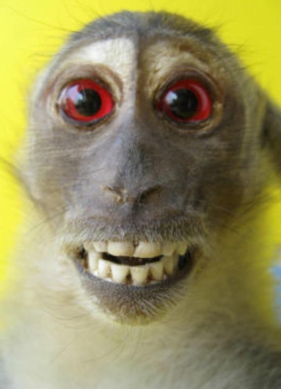 Exasperated Monkey