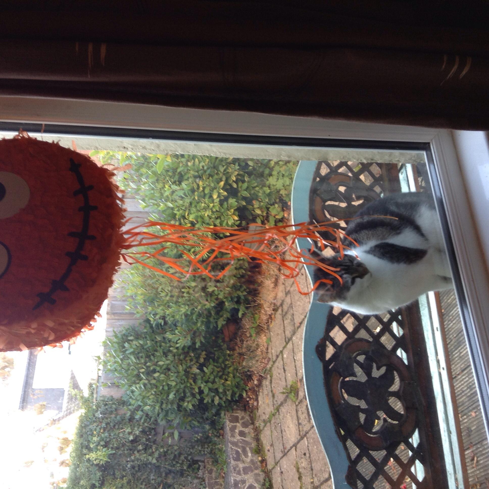 Next door's cat is impressed