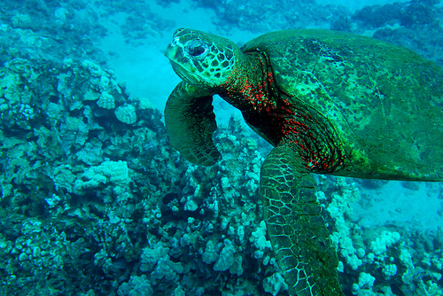 Snorkeling - Click to view more photos