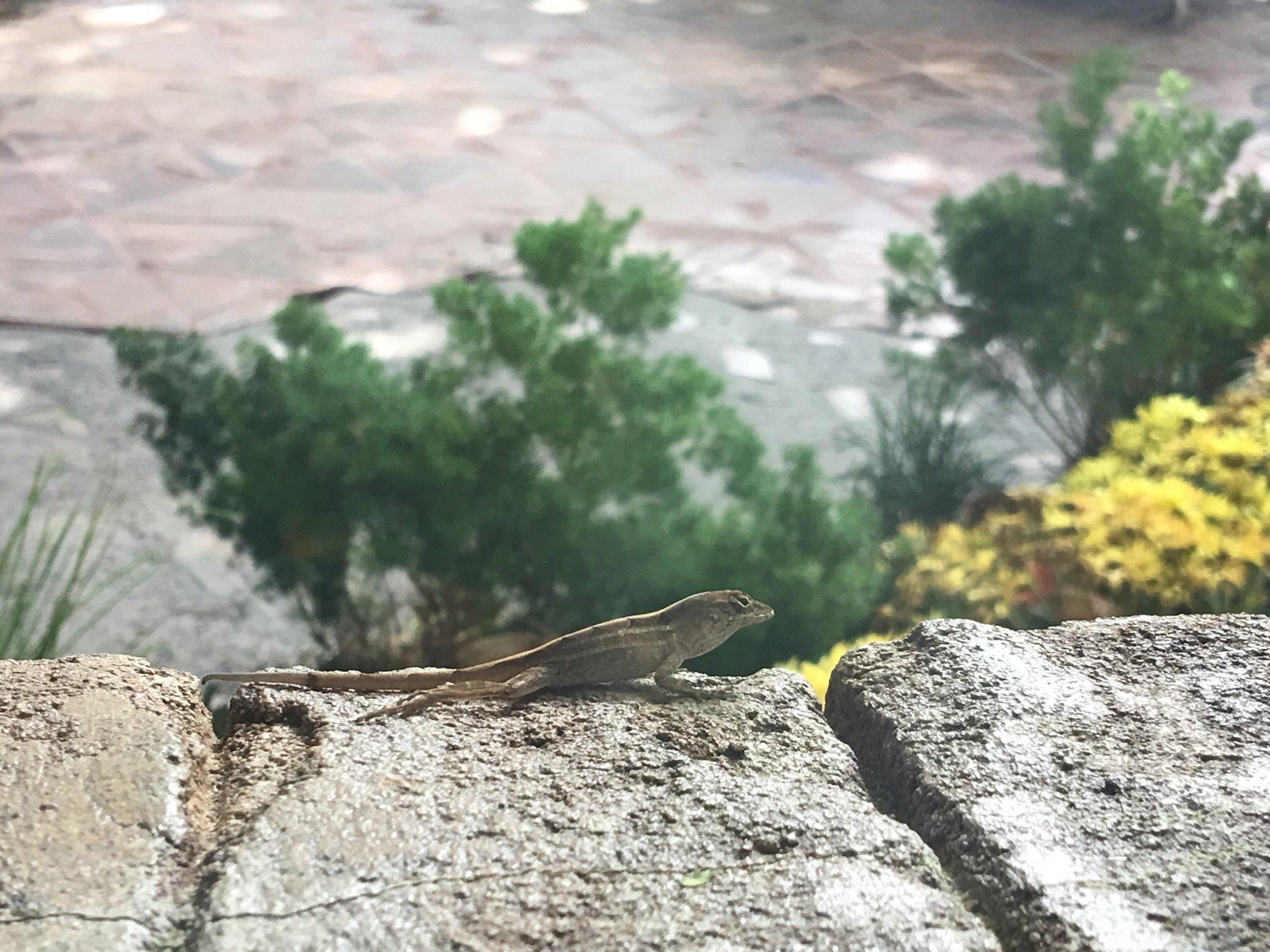 A little friend.
