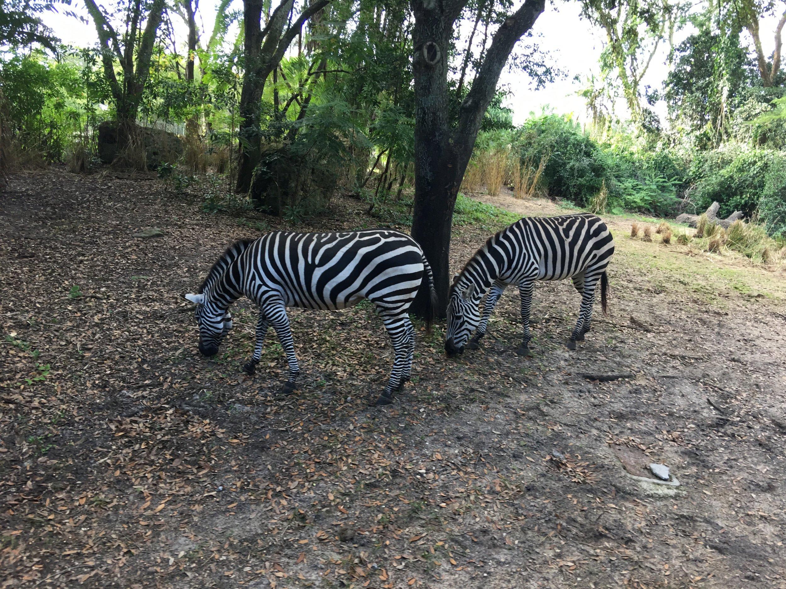 A.K. Safari Tour