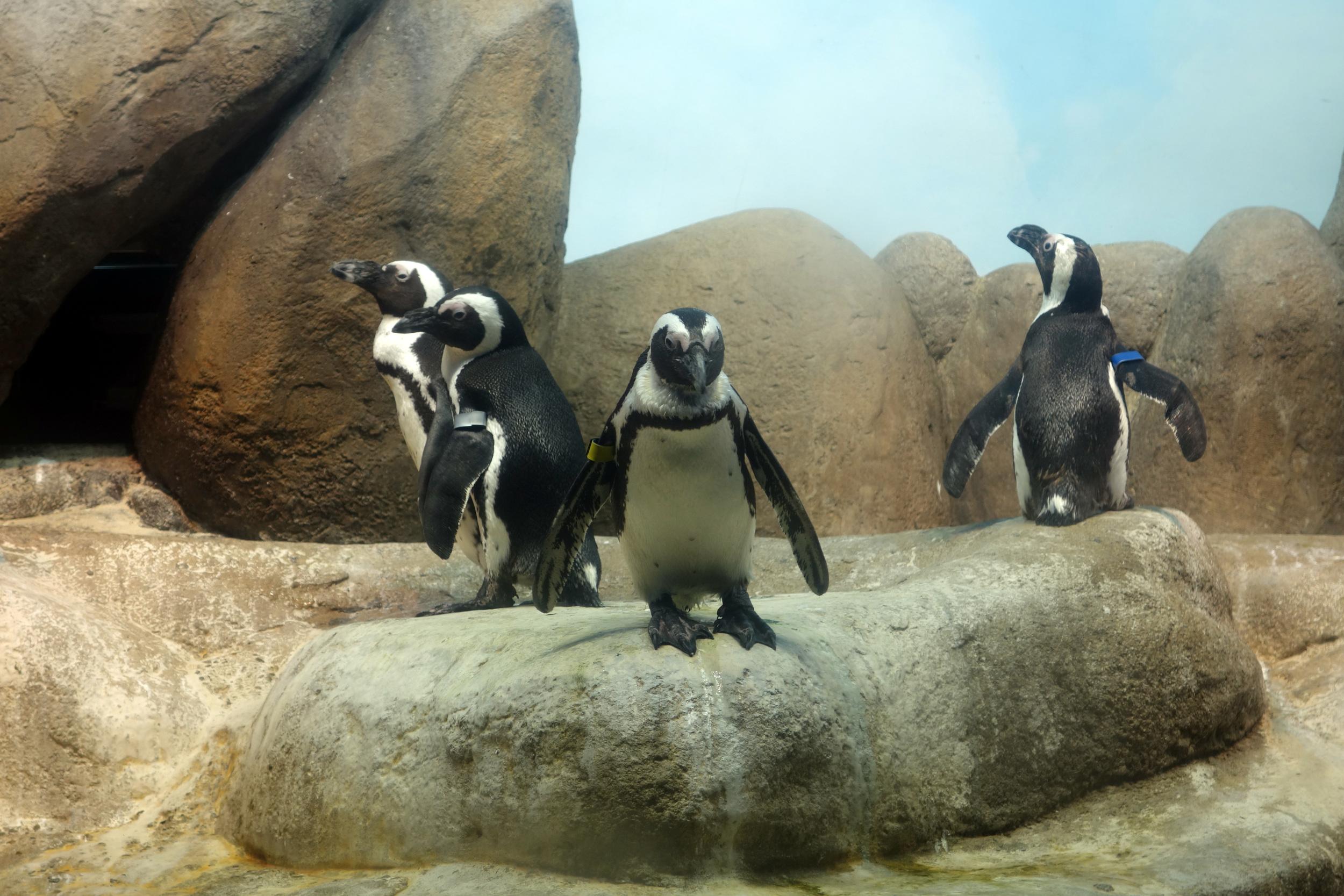 DSC00490 Penguins.JPG