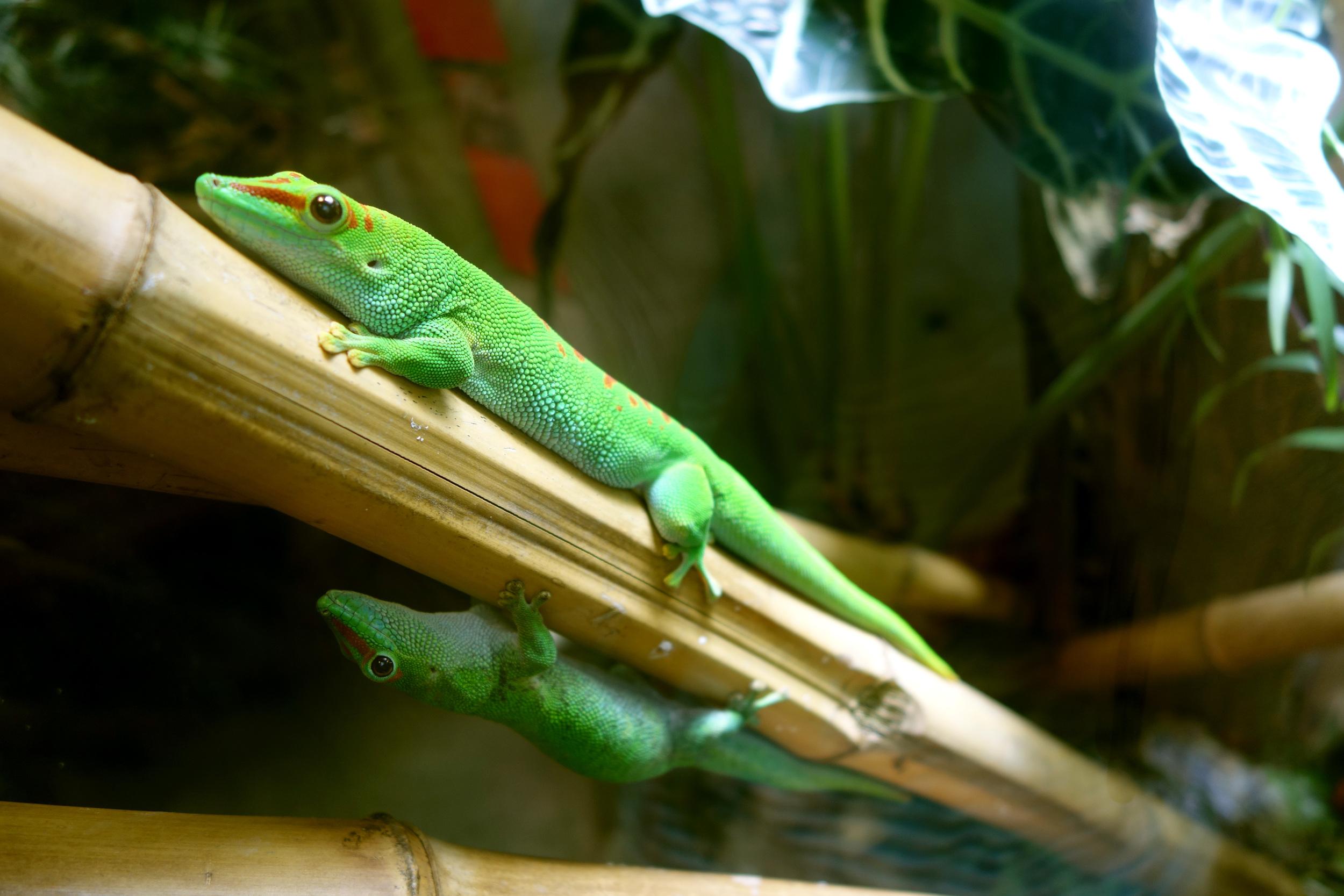 DSC00688 Lizard Pals.JPG