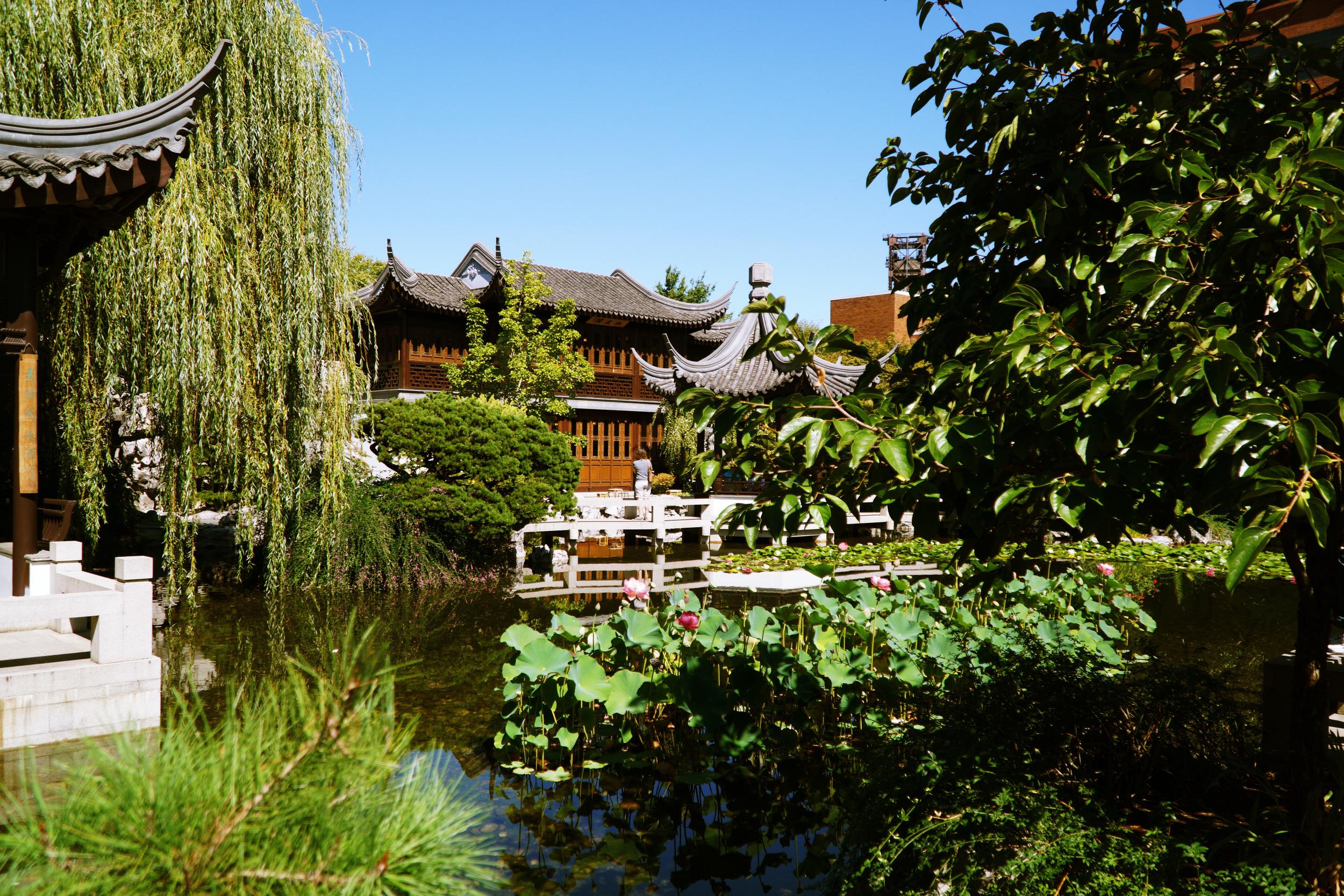DSC01306 Pond and Garden.JPG
