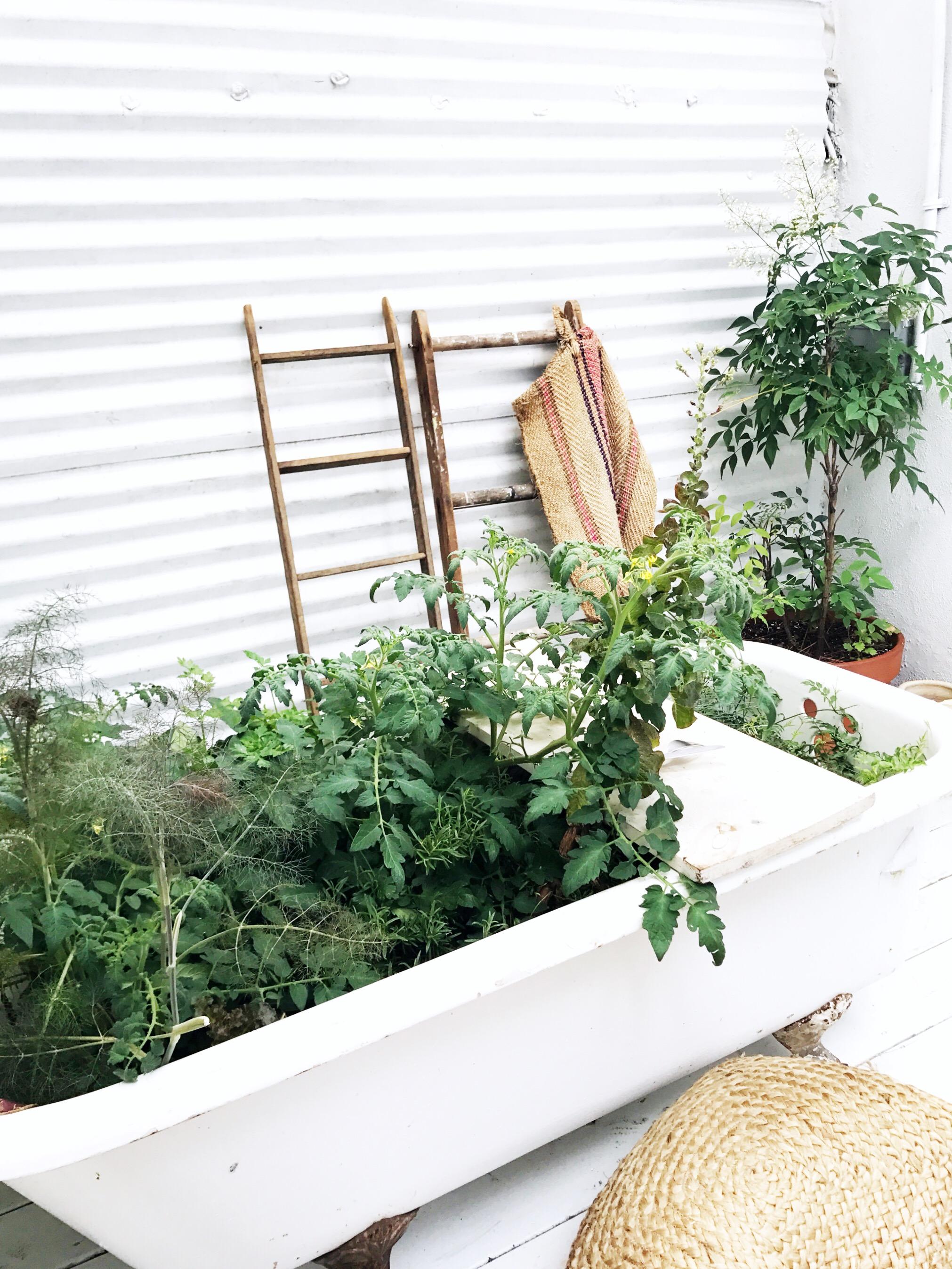 loosie's kitchen plant tub