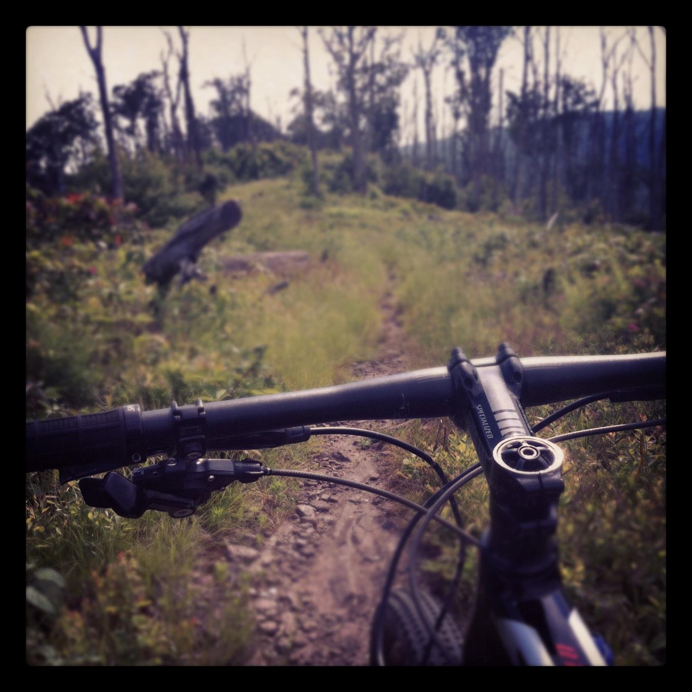 A mountain bike ride