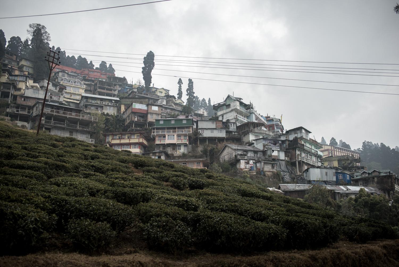 darjeeling_03_7663.jpg