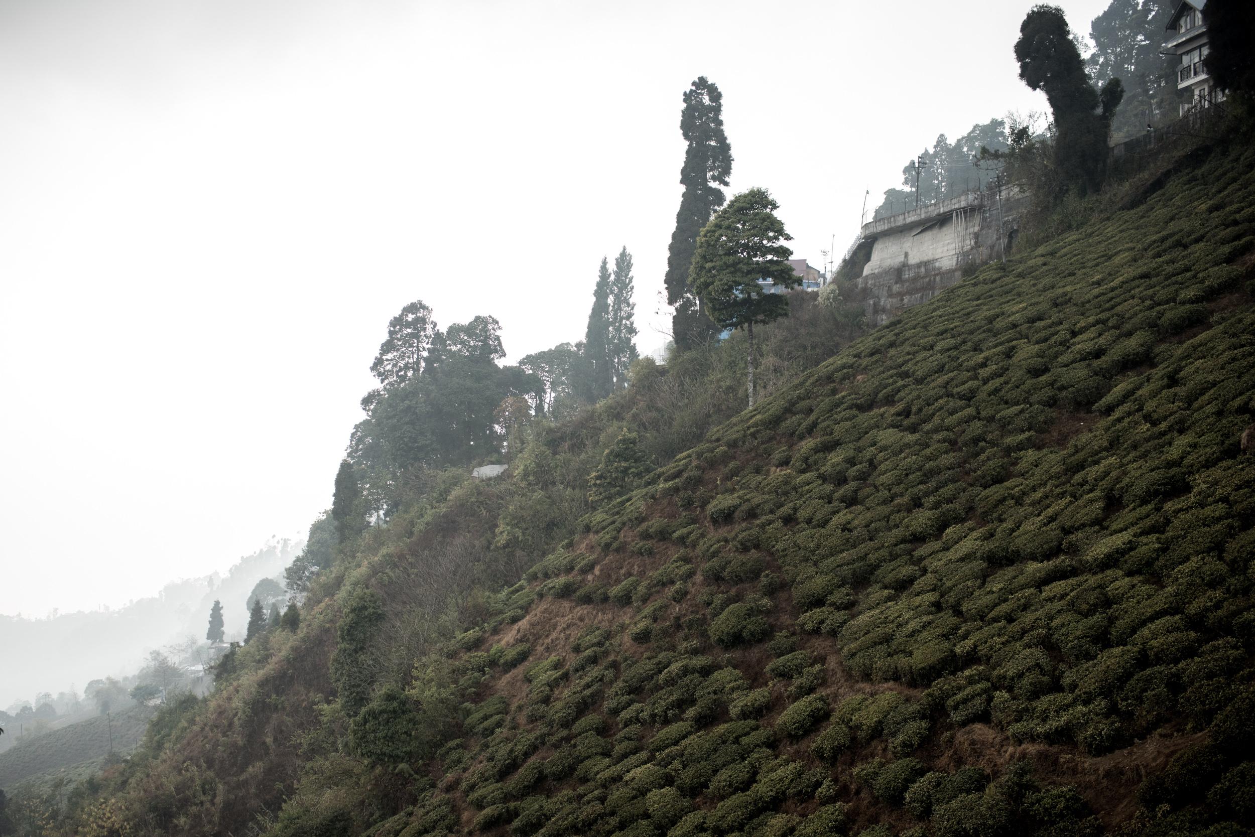 darjeeling_09_7738.jpg