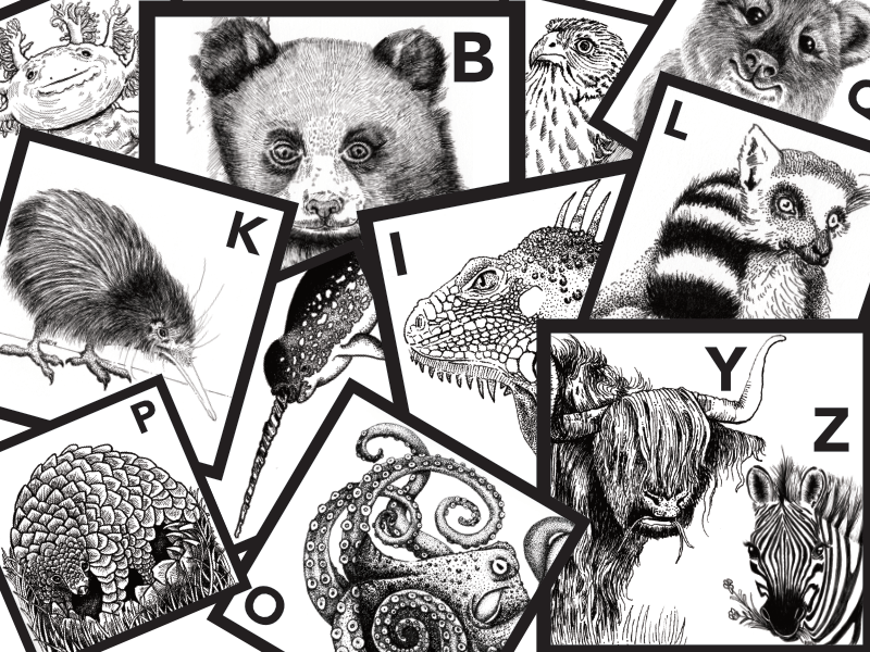 Alphabet Animals A to ZZ