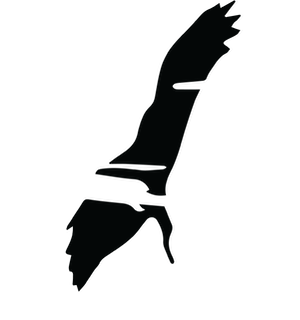 BIRD ONLY LOGO TRANSPARENT sml.png