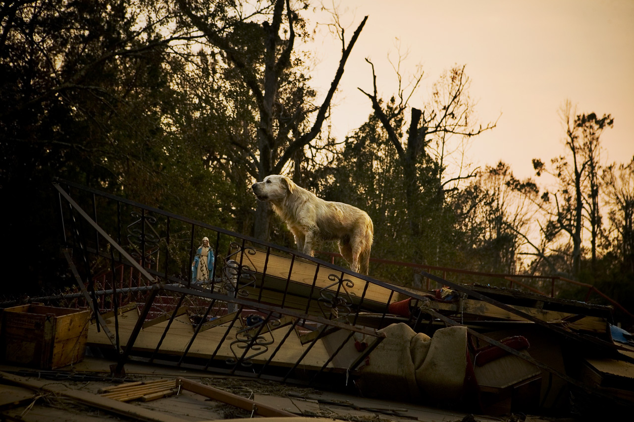 Feral dog on rubble of Catholic church, Pearlington, Mississippi