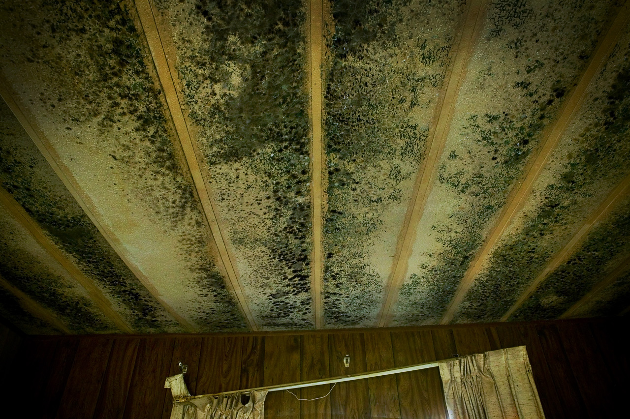 Black mold on my mother's ceiling, which had been completely submerged by storm surge, Pearlington, Mississippi