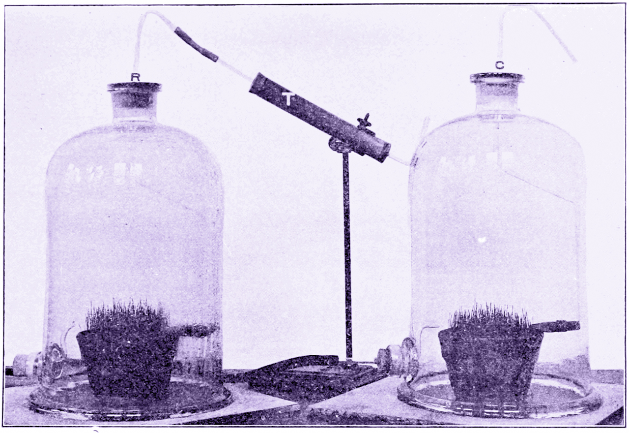 Plant Growth Retardation By Radioactive Air In a Bell Jar. Popular Science Monthly Volume . 74. 1909. Public domain via Wikimedia Commons.