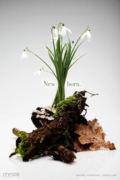 Newborn  – Ett knippe vårkänsla tagna från energirik mark.