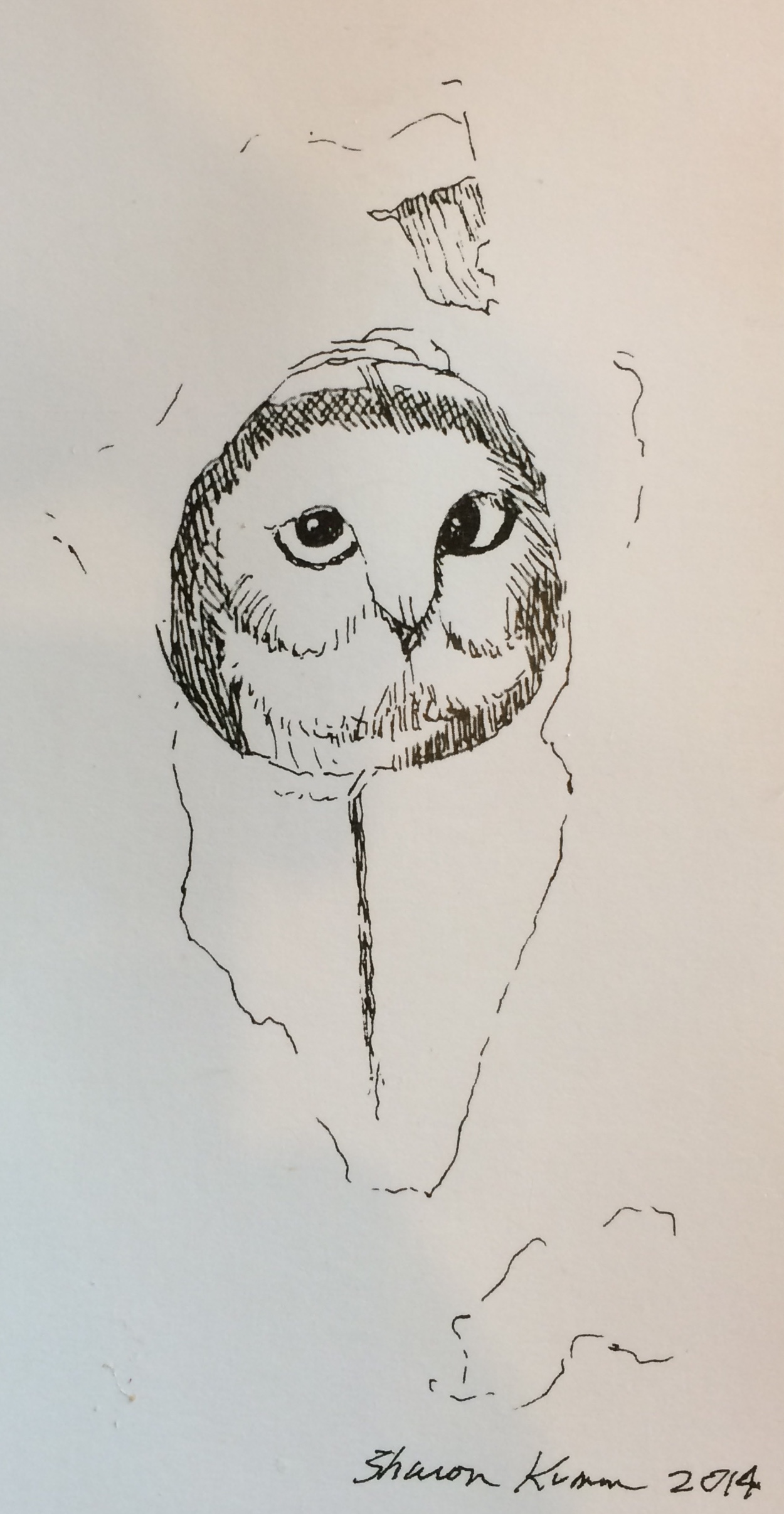 Owl, Pen and Ink Sketch, Sharon Kumm 2014