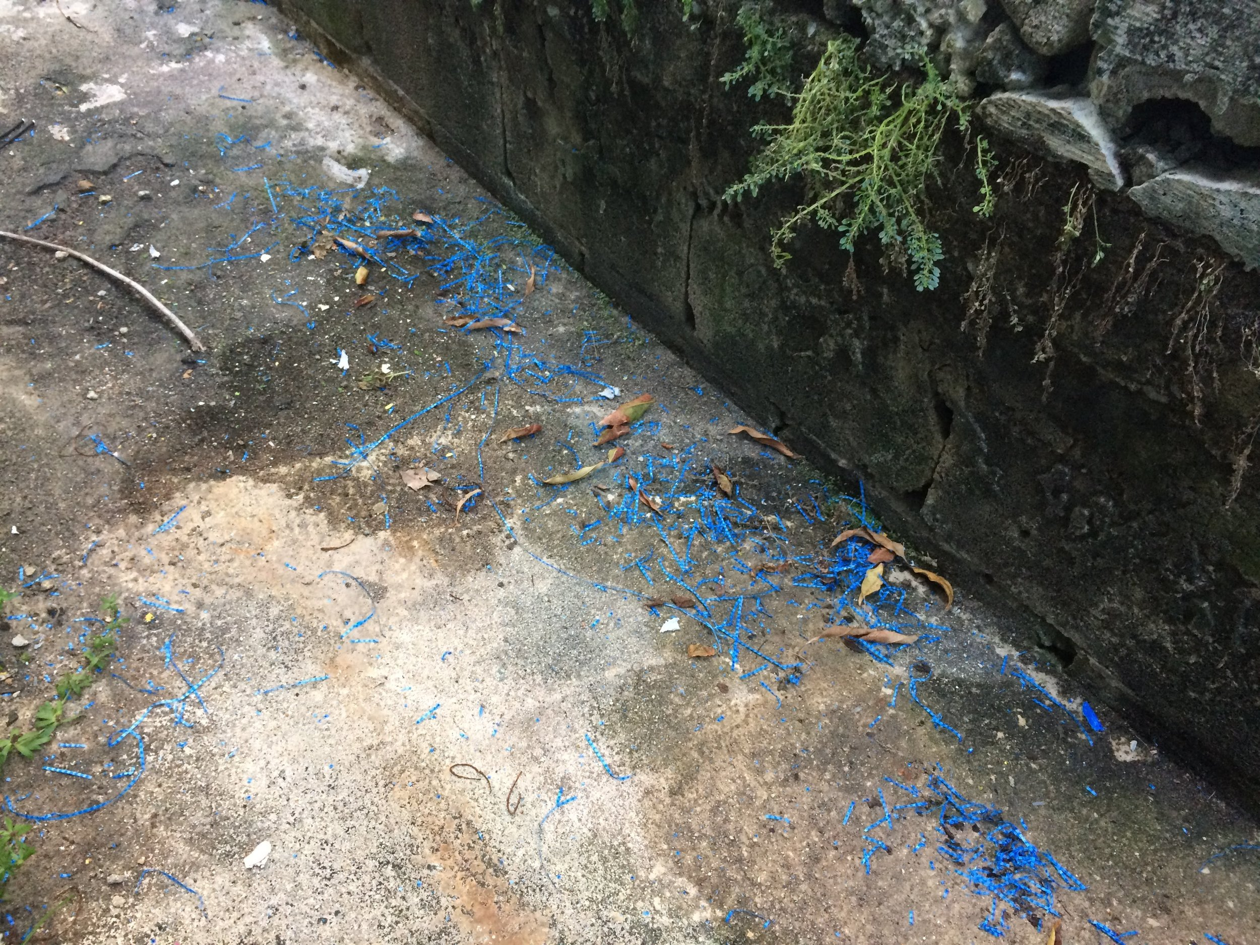 Blue Tarp Pieces Blown into the Alley