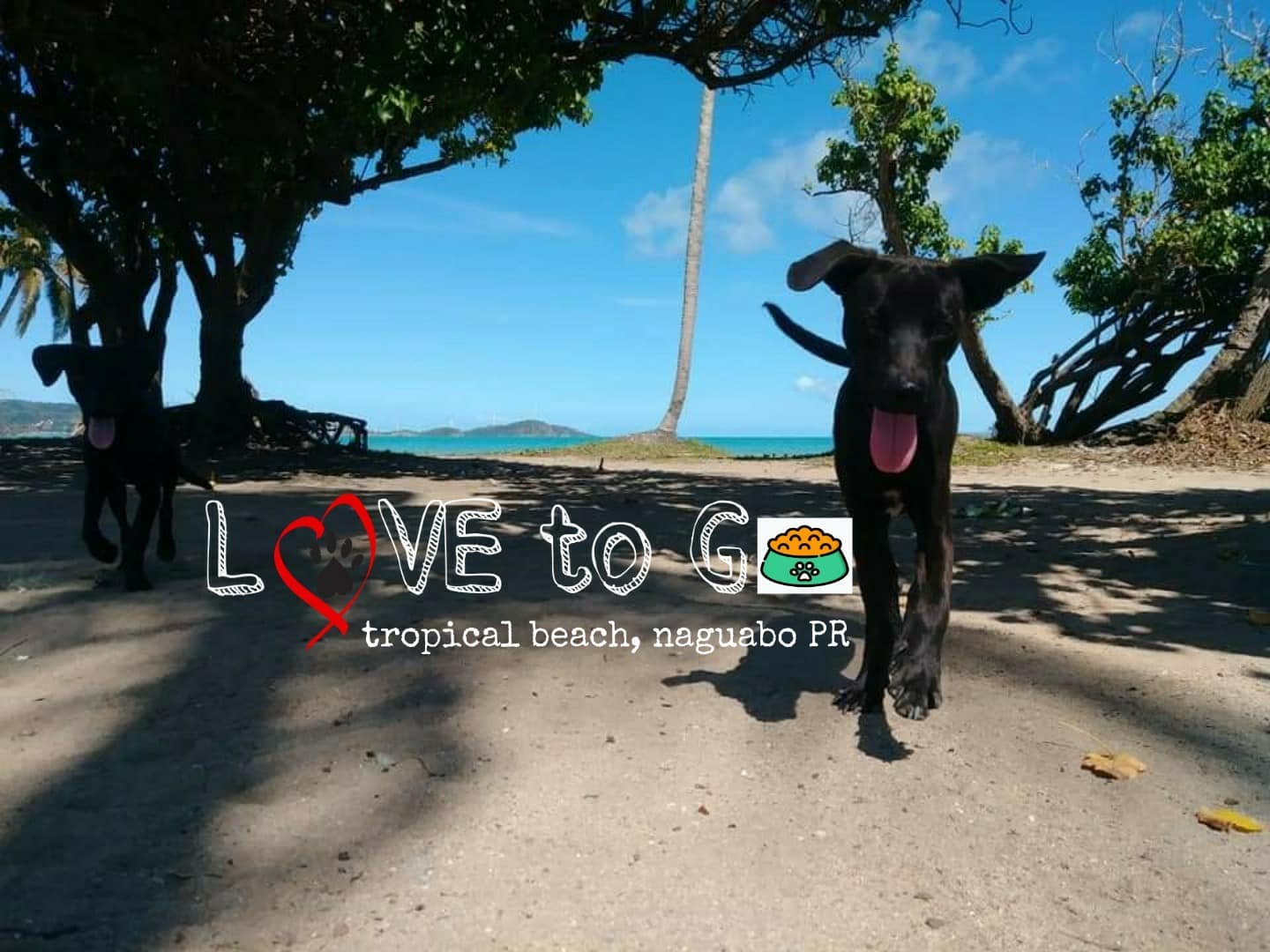 Love to Go - Caring for abandoned dogs and cats in Naguabo, Puerto Rico