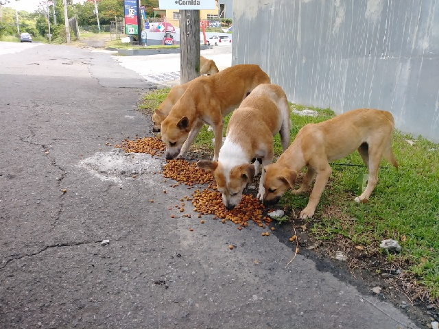 This pack of dogs wait every day by the gas station. Love to Go's founder feeds them every day, mostly with money from her own pocket that she can't afford.