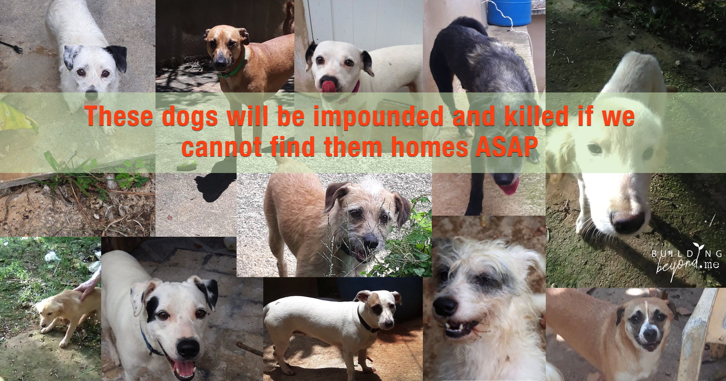 Please help us save Magaly's Dogs from death