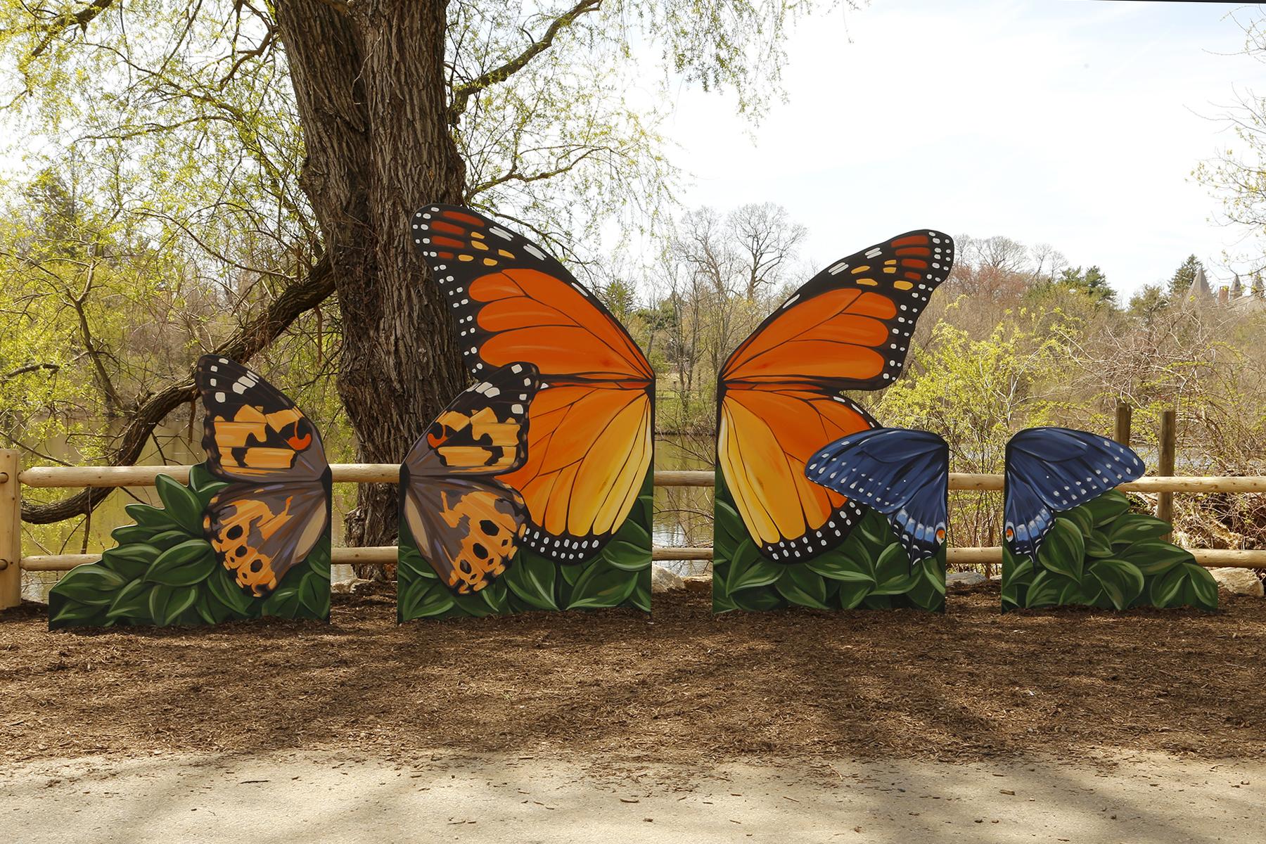 RW ZOO butterflies.jpg