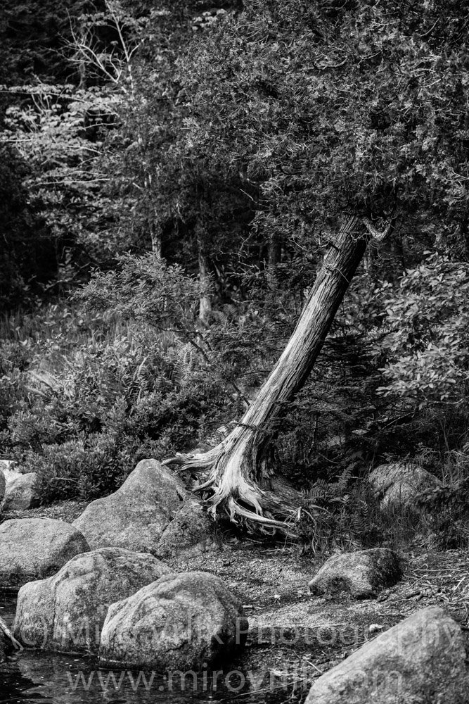 Tree  July 21 2013