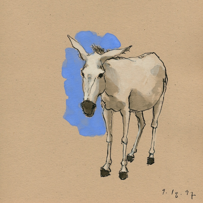 Donkey Series Drawings