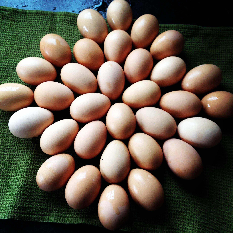 Eggs_in_circle.jpeg