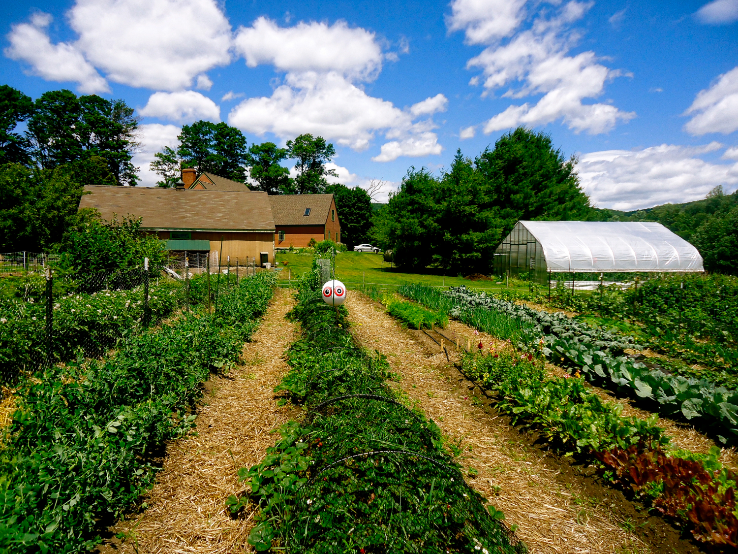 Garden rows w House Greenhouse in back 2_HDR.jpeg