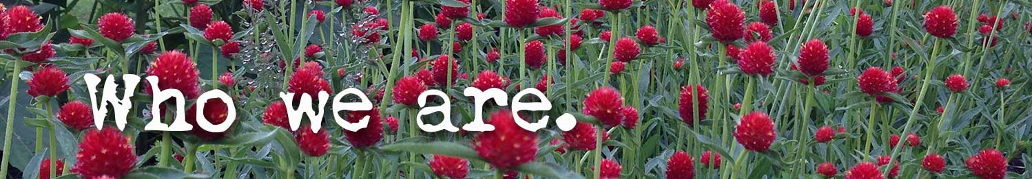 Gomphrena-who-we-are-text_OPT.jpg
