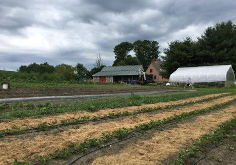 Vegetable fields, greenhouse and packing shed of Red Shirt Farm.  Photo: Emma Bailey Ryan
